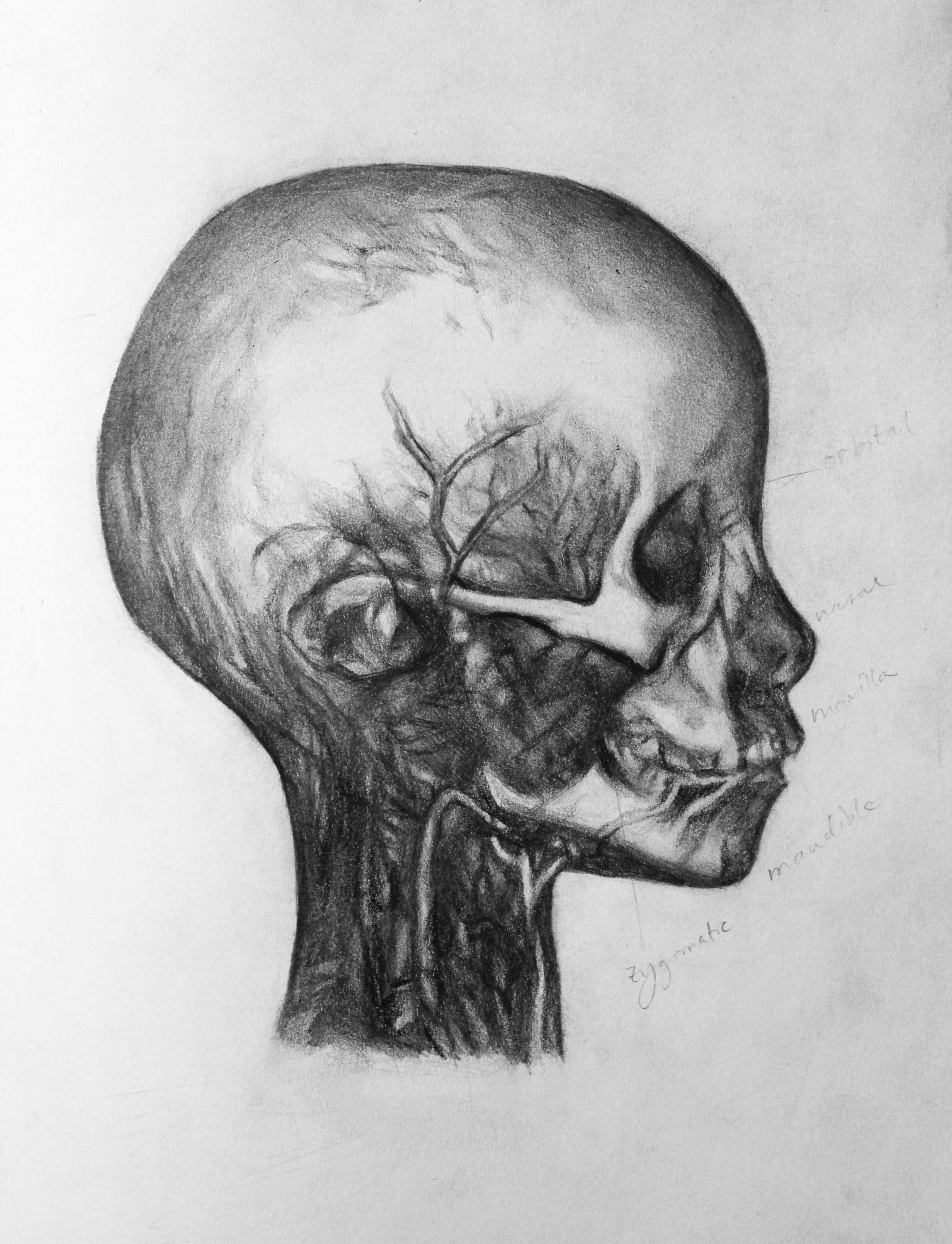Anatomy – Meagan Wu